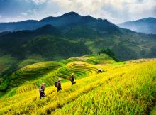 Vietnam - Rijstveld van Mu Cang Chai - YenBai